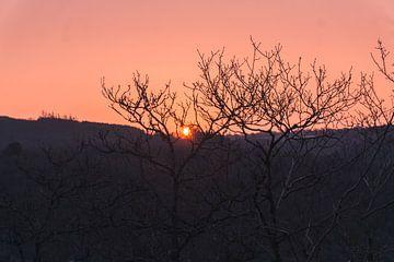 Zonsondergang door de bomen van Nynke Nicolai