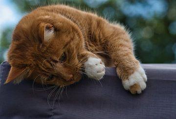 Rote Katze, faul und will noch spielen von J..M de Jong-Jansen