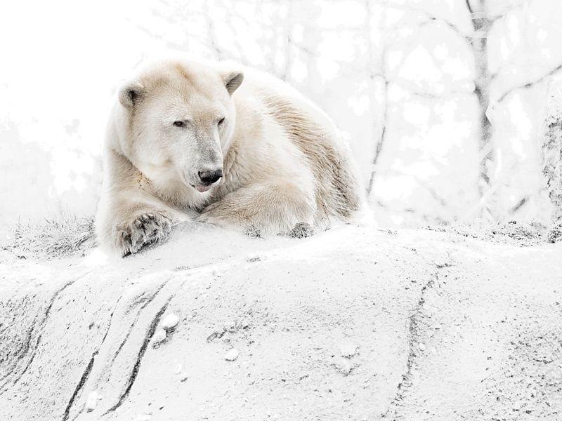 Ijzige ijsbeer von Alexander Koenders