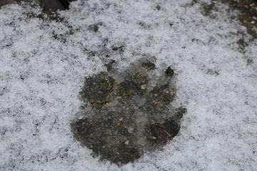 Pootafdruk in de sneeuw van Rosalie Broerze