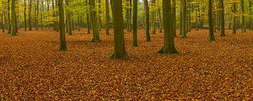 Herfstbos panorama sur Sjoerd van der Wal