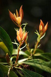 Springtime Orange Leaves