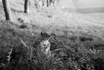 Erdhörnchen - London von Maurice Weststrate