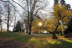 Herfst in een foto van Westerhof.JPG