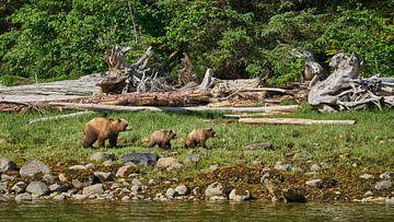 Familie Grizzly op wandeltocht von Gerard Oonk