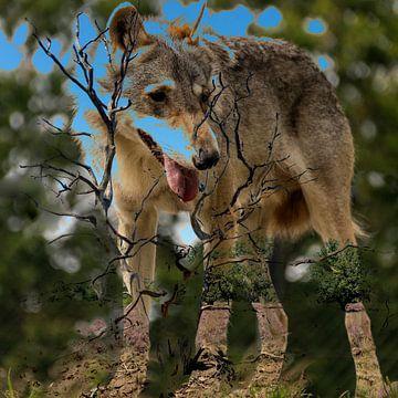 Wolf von Frans Van der Kuil
