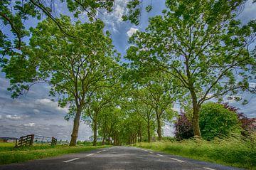 Polderweg in het Groene Hart von John Wiersma