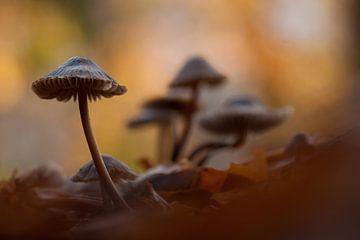 paddenstoelen van Erik van Velden