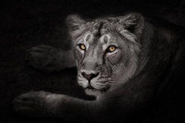 die strengen gelb glühenden Augen einer Nachtlöwin im Mondlicht blicken Sie vorsichtig und streng au von Michael Semenov