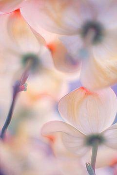 Unter den Röcken der Blumen, Francois Casanova von 1x