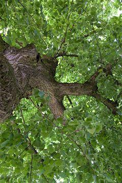 Vrijheidsboom van Ronald Jansen