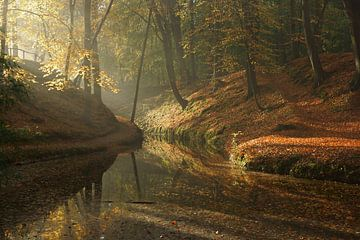 Herfst in het bos von Michel van Kooten