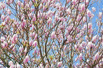 Magnolia von Jeannette Penris