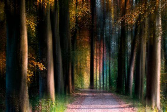 Gekleurd bos van Jacq Christiaan