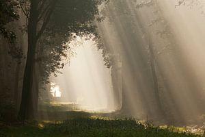 To the light... I