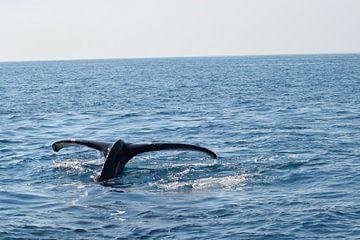 De staart van een walvis op open zee van Bianca Bianca