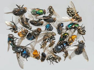 Viele verschieden tote Insekten liegen auf einem Haufen von Hans-Jürgen Janda