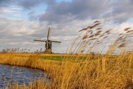 Hollandse molen, luchten en rietkragen