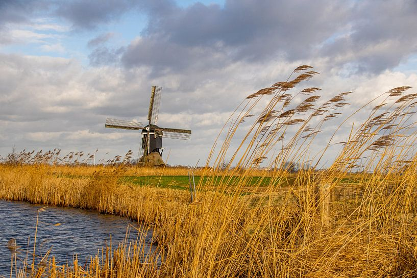 Hollandse molen, luchten en rietkragen van Brigitte Alphenaar