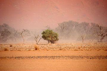 NAMIBIA ... through the storm III von Meleah Fotografie