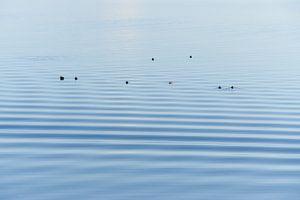 Entenruhen auf dem Wasser