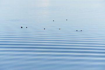 Eendenrust op het water van Geert van Kuyck