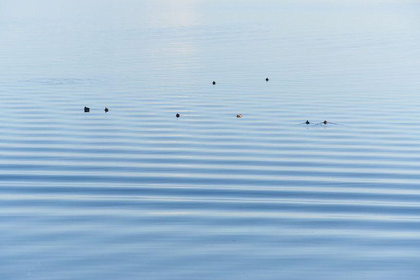 Entenruhen auf dem Wasser von Geert van Kuyck