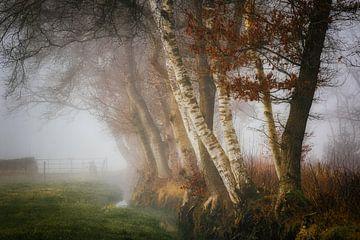 Waldrandlandschaft mit Graben und Zaun im Nebel