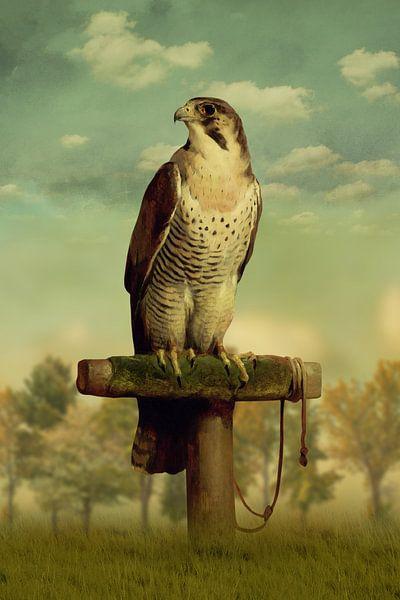 The Falcon von Marja van den Hurk