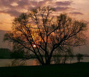 Avondboom van Jeroen Schellevis