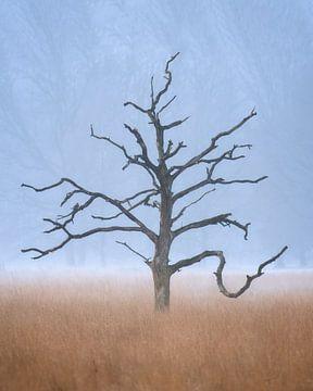 Skelet van een oude boom op de Kampina.