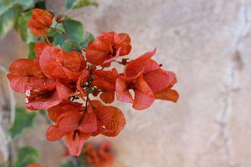 Nahaufnahmen von Blumen von Manon Gheeraert