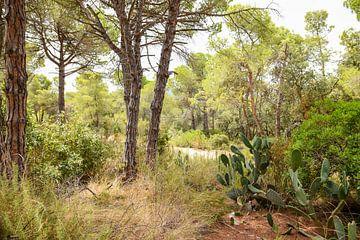 Ongerepte natuur in Spanje van Maria-Maaike Dijkstra