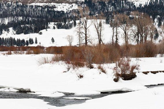 Landschap in Yellowstone Nationaal Park in de winter
