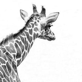 Giraffe van Hennie Zeij