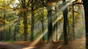 Lichtstralen in een herfst bos