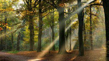 Lichtstralen in een herfst bos van