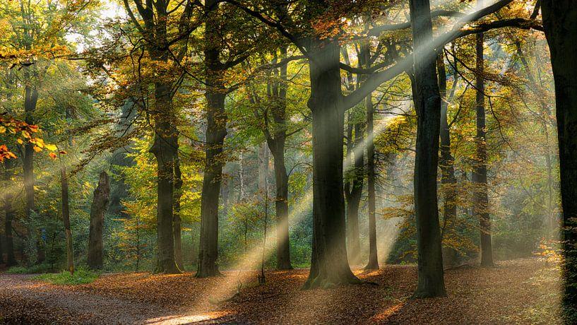 Lichtstralen in een herfst bos van Bram van Broekhoven