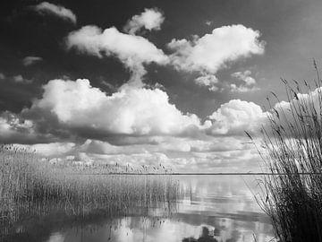 Saaler Bodden bei Wustrow auf dem Darß 9 schwarz-weiß von Jörg Hausmann