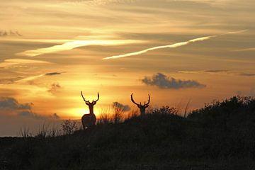 damherten by sunset van