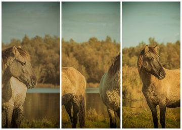 lauwersmeer triptychon 20 von anne droogsma