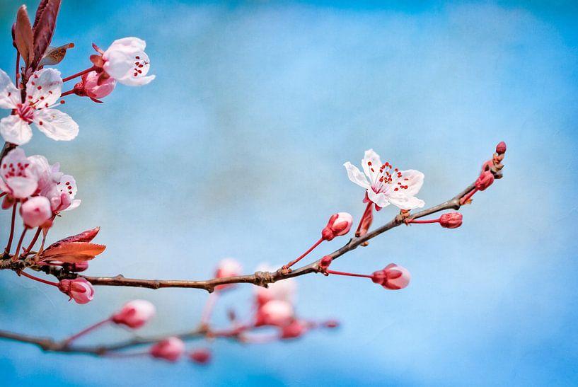 Bloesem tegen blauwe lucht van Arja Schrijver Fotografie