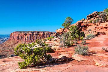 Indrukwekkend landschap van Canyonlands Nationaal Park, Utah van Rietje Bulthuis
