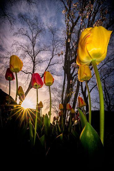 Tulpenlaan van Peter Vruggink