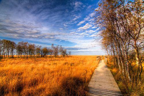 High Fens Pathway van Colin van der Bel