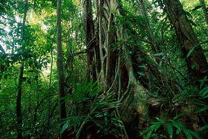Tropisch regenwoud met wilde vegetatie en bomen, Panama