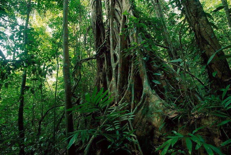 Tropisch regenwoud met wilde vegetatie en bomen, Panama van Nature in Stock