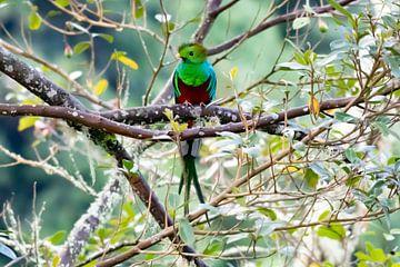 Quetzal van Merijn Loch