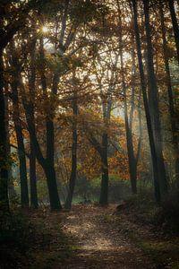 mistig Herfst bos van