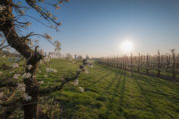 Bloesem fruitboom en molen 04 von Moetwil en van Dijk - Fotografie